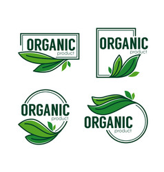 Nature product doodle organic green leaves vector
