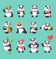 Panda bearcat or chinese bear with bamboo vector