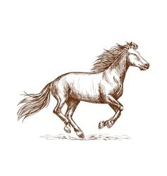 White horse running gallop sketch portrait vector image