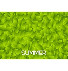 Abstract green summer leaves texture vector image vector image