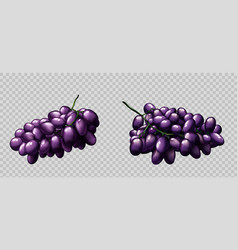 realistic grapes bunches ripe purple berries set vector image