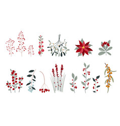 set various winter plants and berries vector image