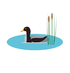 Wild duck in pond with reeds vector