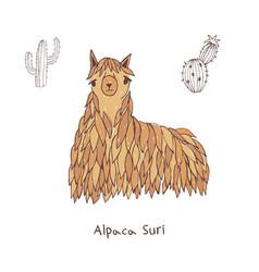 alpaca suri hand drawn doodle vector image