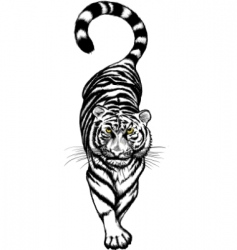 Black and white crouching tiger vector