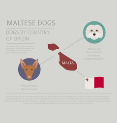 Dogs by country of origin maltese dog breeds vector