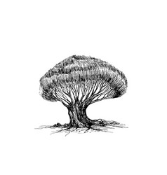 realistic sketch a tree with many branches and vector image