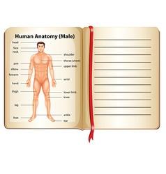 Human anatomy on a page vector image