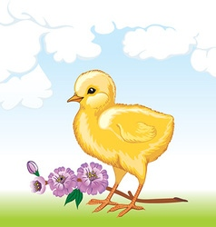 Cute baby chick vector