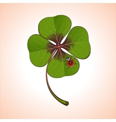 clover with ladybug vector image