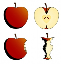 states of apples vector image