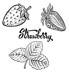 set of hand drawn strawberry design elements for vector image