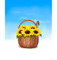 Spring background Basket full of sunflowers and a vector image vector image