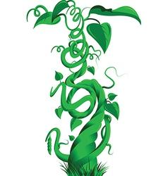Beanstalk vector image