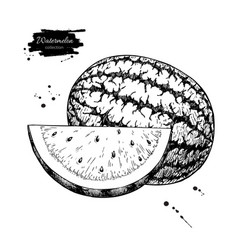 watermelon and slice drawing isolated hand vector image