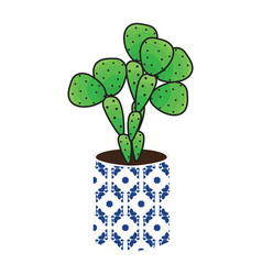Cactus homeplant in a pot vector