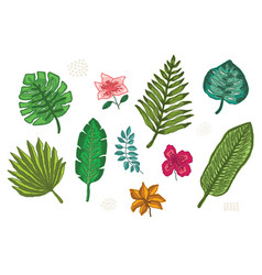 collection of bright tropical leaves and flowers vector image