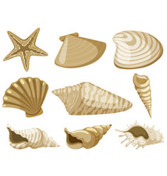 Different types of seashells in brown color vector