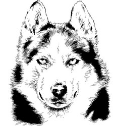 dog husky hand-drawn ink on white background vector image