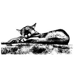 mountain lion sleeping vector image