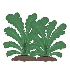 Plants isolated vector