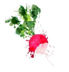 Radish made of colorful splashes vector image