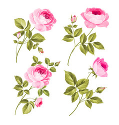 rose bud collection elements roses isolated vector image