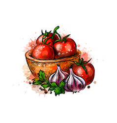 Tomatoes and garlic from a splash of watercolor vector