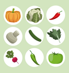 collection vegetables fresh ingredients vector image