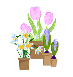 spring bulbous flowers vector image