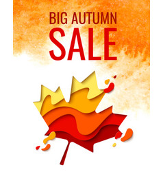 autumn sale template banner with maple leaf vector image
