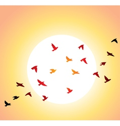 Birds and sun vector
