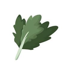 Chard vegetable nutrition vitamin food health vector