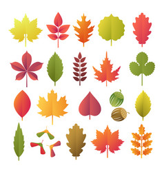 Colorful autumn leaves set isolated on white vector
