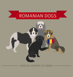 Dogs by country of origin romanian dog breeds vector