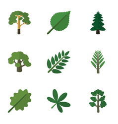 Flat icon bio set of wood tree linden and other vector