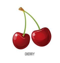juicy and sweet tiny red cherry vector image