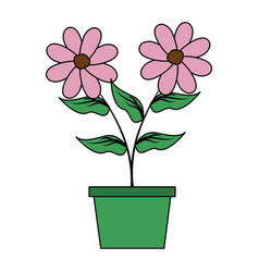 potted flowers decoration vector image