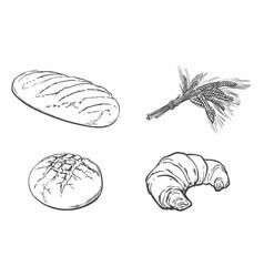 sketch white loaf bread croissant set vector image