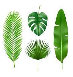 Tropical leaves jungle green plant nature vector