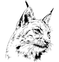 grinning snout lynx with fangs hand-drawn vector image