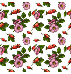 rosehip flowers and berries vector image