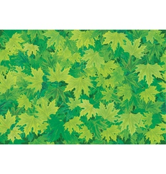 seamless background of green leaves vector image