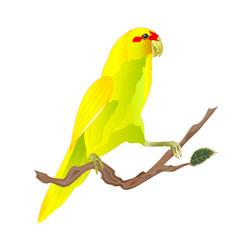 Bird indian ringneck parrot in yellow on branch vector
