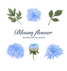 Bloom flower watercolor creative chrysanthemum on vector