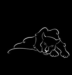 Lying sweetheart black panther in night vector