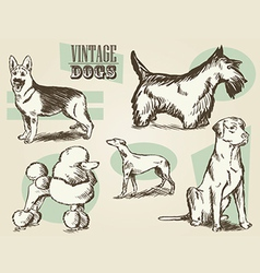 Vintage Dog Etchings vector image vector image