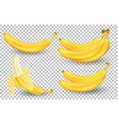 realistic set bananas isolated on transparent vector image