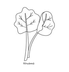 Rhubarb iconoutlineline icon vector