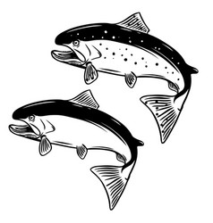 salmon fish on white background vector image
